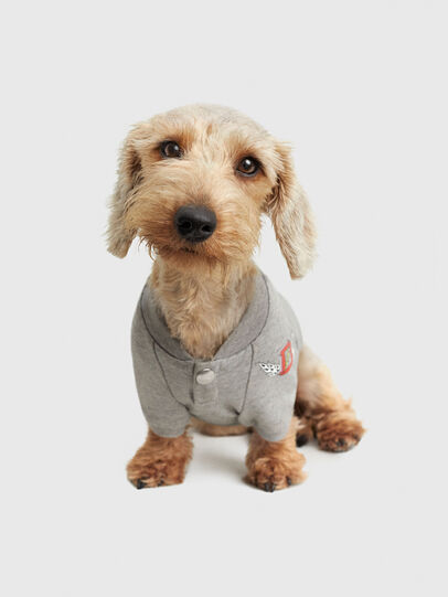 Diesel - PET-WOLF-GRY, Grey - Other Accessories - Image 1